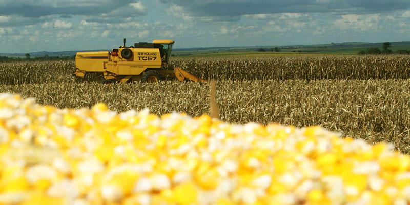 MPF Pede Suspensão Das Liberações Comerciais De 3 Sementes De Milho Transgênicas