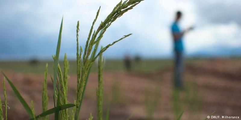 Mudanças Climáticas Ameaçam Valor Nutricional De Alimentos