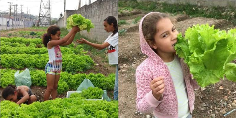Em SP, Crianças Se Alimentam De Hortaliças Que Elas Mesmas Plantaram