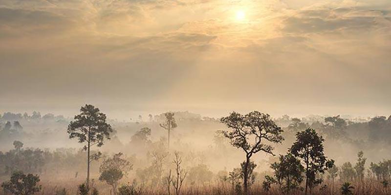 Perda De Savana Africana Emite Três Vezes Mais CO2 Do Que Se Pensava
