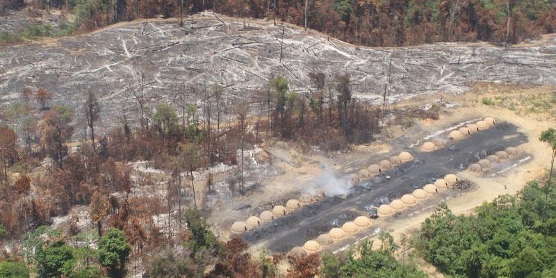 Políticos Da Bancada Ruralista São Cúmplices Da Destruição Da Amazônia, Com Apoio De Multinacionais