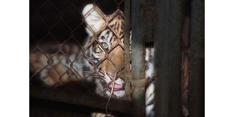 65% Dos Europeus Não Querem Animais Selvagens Nos Circos, Revela Sondagem