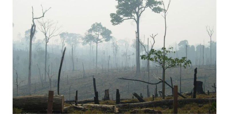 Desmatamento Para Produção De Commodities Persiste No Brasil E No Mundo