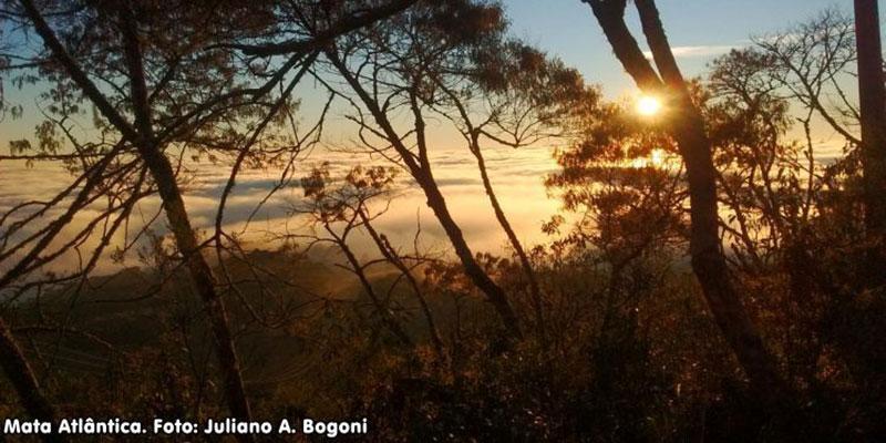 Estudo Pioneiro Sobre Solos Da Mata Atlântica é Publicado Na Revista Restoration Ecology