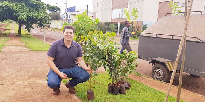 Viveiro Floresta Nativa Doa árvores Para O Bosque Sensorial