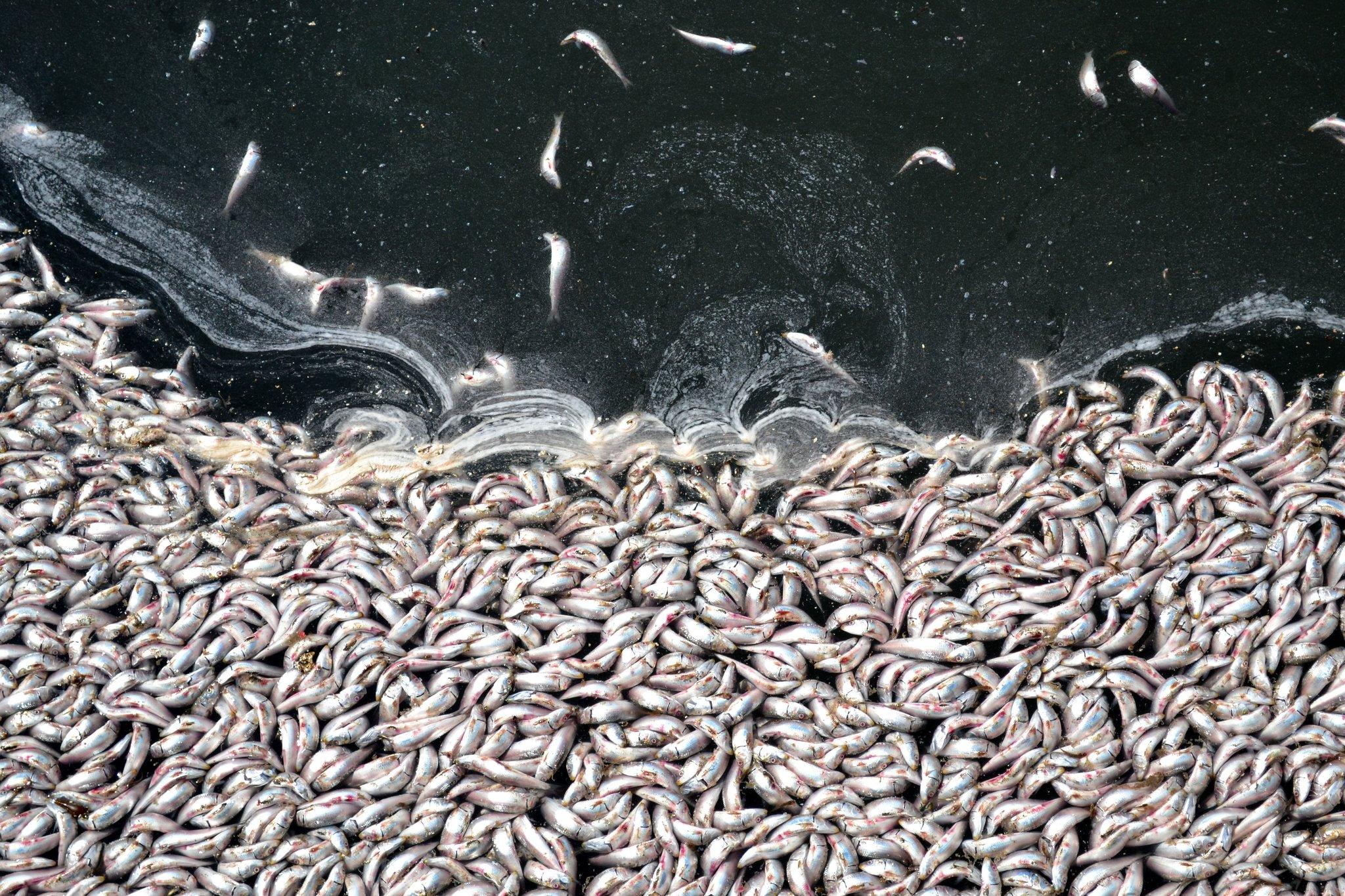 Oceanos Do Mundo Estão Perdendo Oxigênio Rapidamente