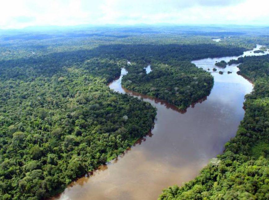 Impacto Das Florestas No Ciclo Global Do Carbono