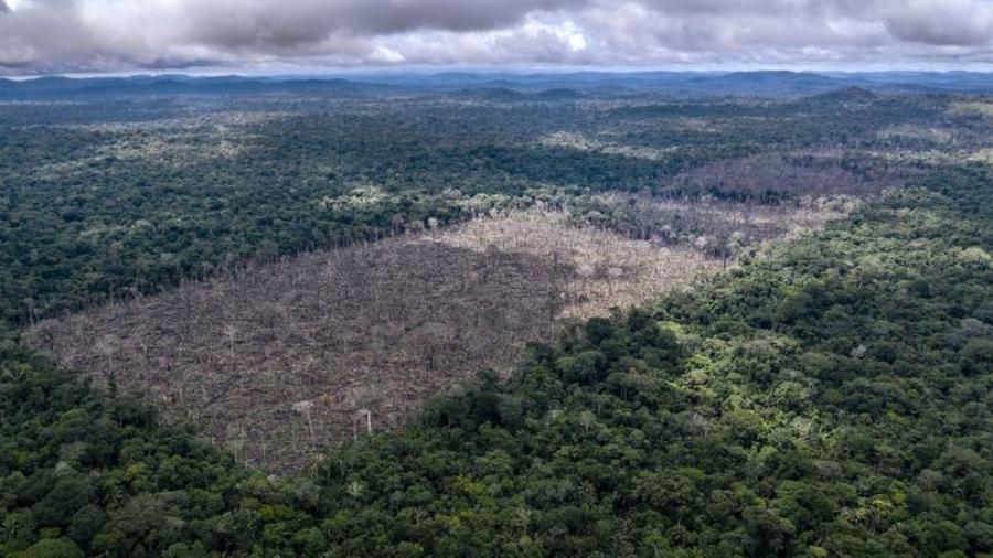 Florestas Da Amazônia Perderam 974 Toneladas De Carbono Entre 2011 E 2015