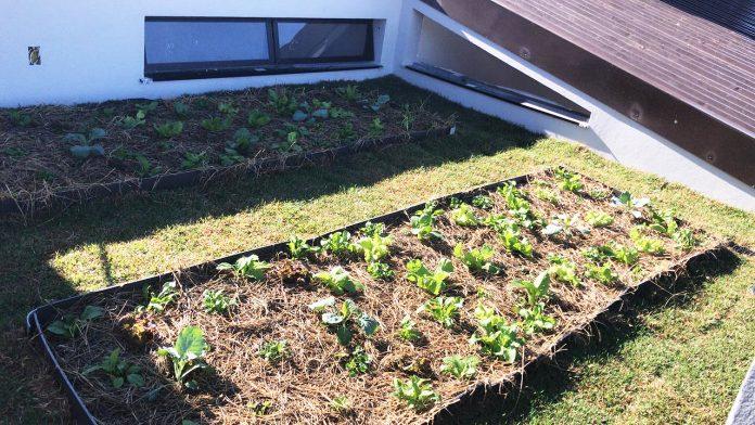 Hortas No Teto Melhoram Qualidade De Vida Nas Cidades