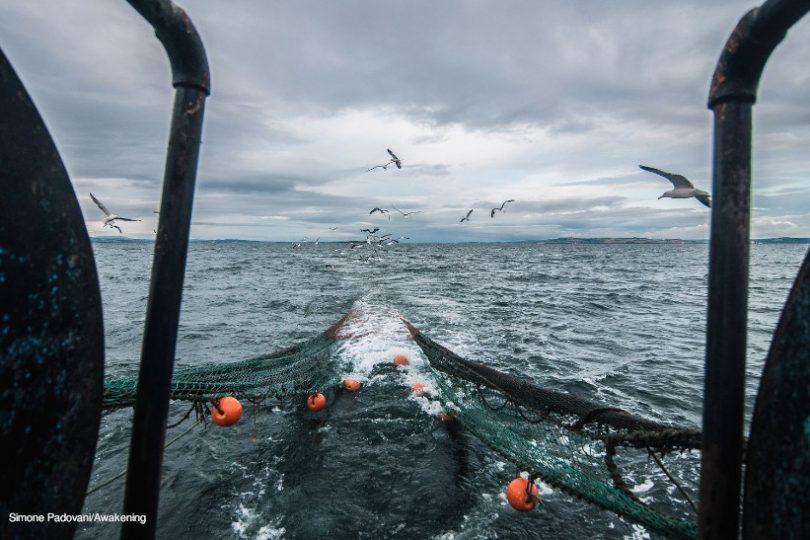 Estamos Tirando A Vida Do Mar